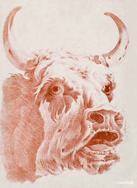 Head of a Cow (ca.1778) print in high resolution by Louis-Marin Bonnet. Original from the Smithsonian Institution. Digitally enhanced by rawpixel.