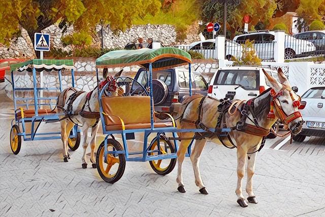 burros taxi