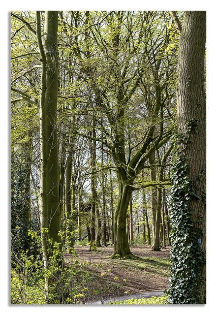 Woodland springs.