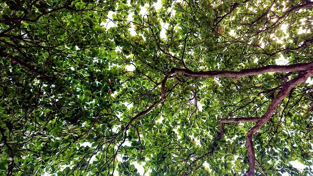 111/365: endless green