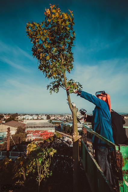 Cutting down a tree - April 2021 (8)