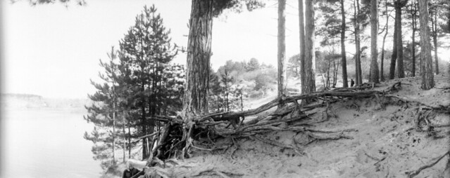 Lake Root Walk