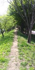 봄날 아침산책길 | 파주출판단지