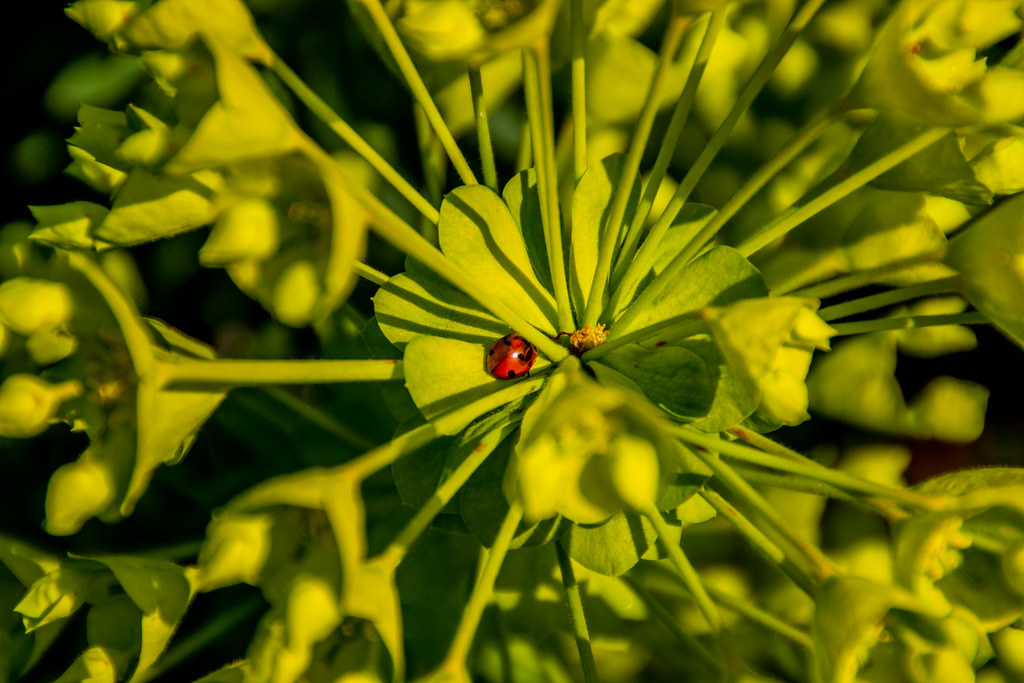 2021 - 04 - 17 - EOS 600D - Ladybird resting - Chester Zoo - 000