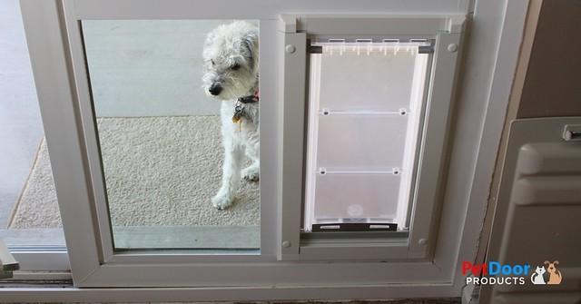 PetSafe Energy Efficient Doggie Door for Your Home in Utah