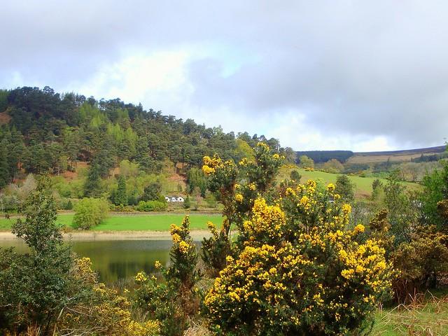 Nature in Glendalough/ Explored