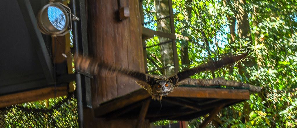 Flying owl AK