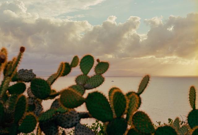 Cacti and Catalina