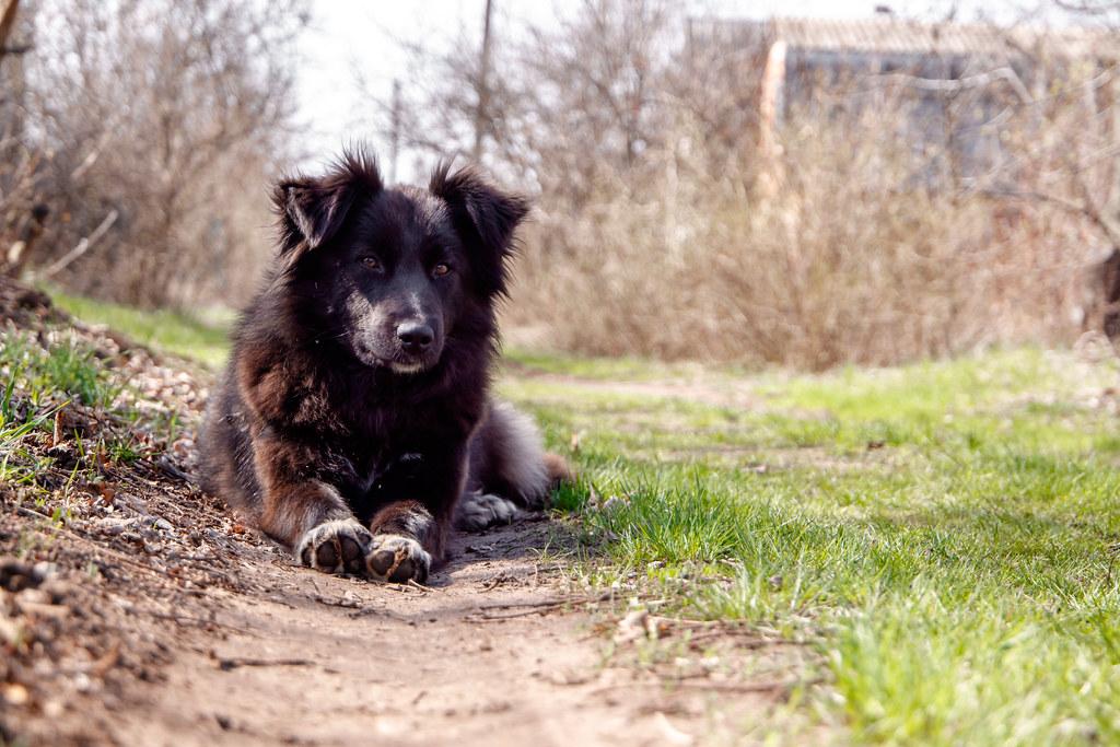 dogy-dog_2