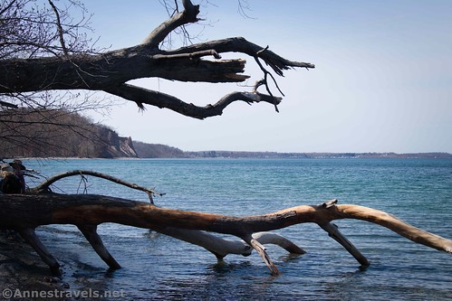 Dead trees along the lakeshore between Sterling Nature Center and Fair Haven State Park, New York