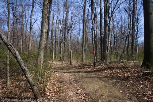 Trail through the woods, Fair Haven State Park, New York