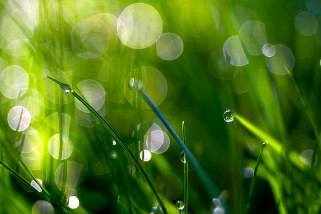 Dew in the garden[Explore]