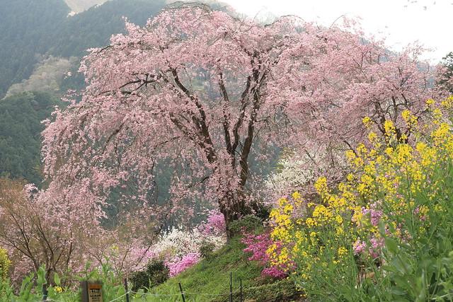 Full Spring