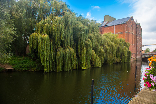 Weeping Willow at Tewsbury