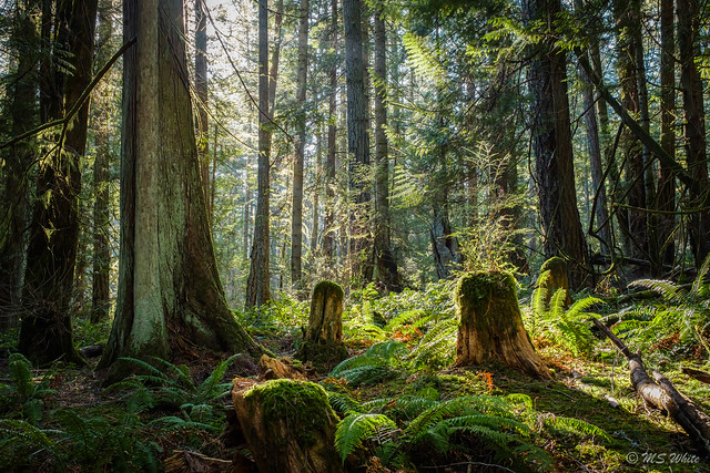 Chasing light in the enchanted forest #2...Happy Earth Day 2021
