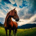 Paradise Horse