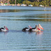 Four Pelicans with bright pink bills