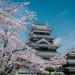 Mastumoto Castle with Cherry Blossoms
