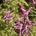 fleurs sauvages_DxO