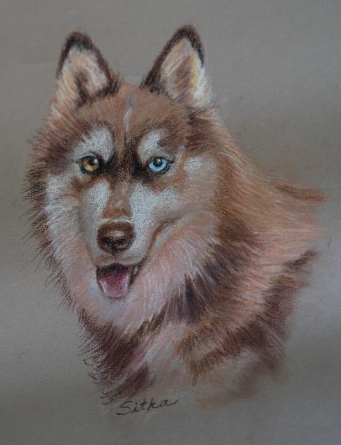 Pastel Portrait of Sitka by Janice Gail