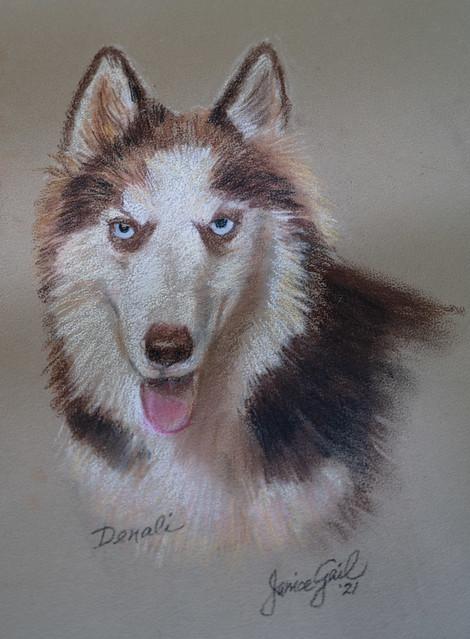Pastel Portrait of Denali by Janice Gail