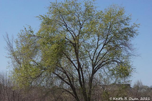 Tree in My Niece's Yard