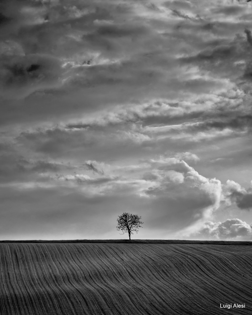 Lonely tree - Marche countryside