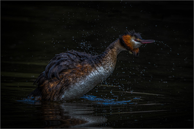 Its a Grebe thing !