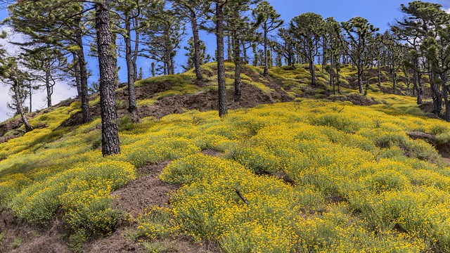 *La Palma @ Spring Forest Panorama*