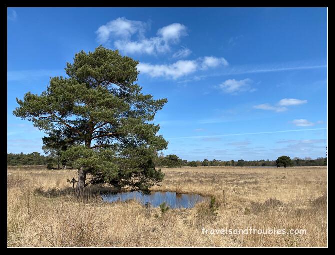 Op de Strijbeekse Heide