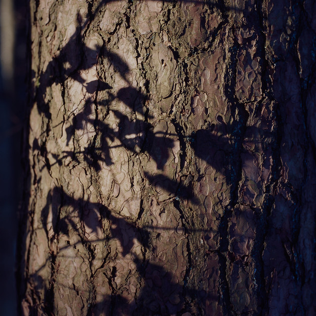 Forest stories 2a - The sound of shadows sliding across tree trunks