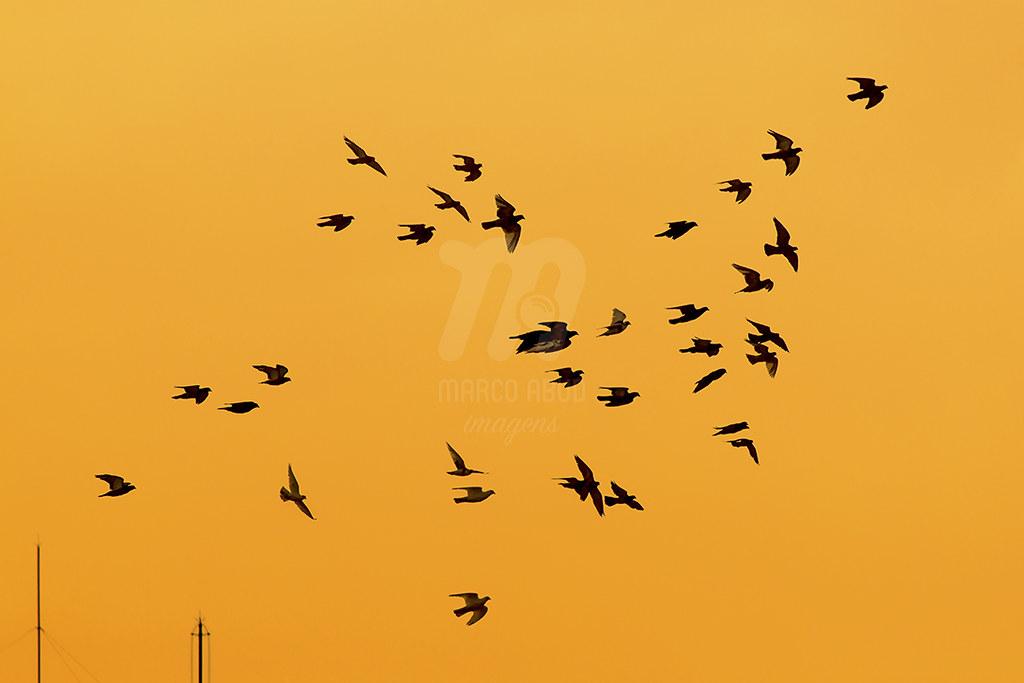 Pigeons n' Sunset