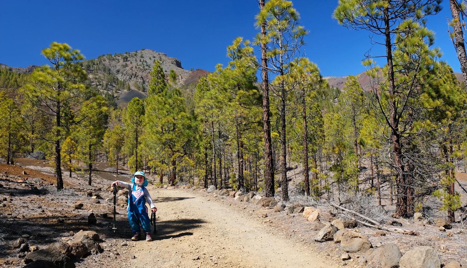 Corona forestal, Tenerife, Canary Islands, Spain