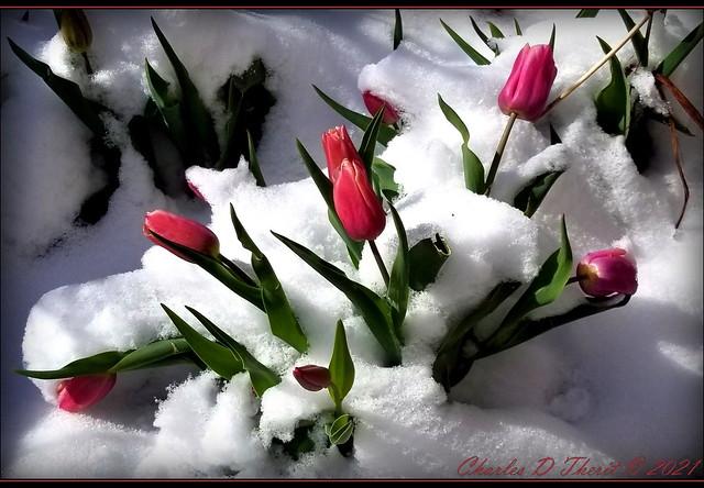 Colorado Springtime