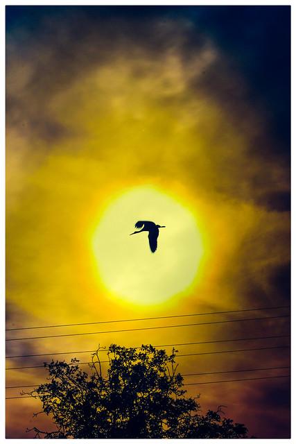 No pidas permiso para volar; las alas son tuyas y el cielo no es de nadie.