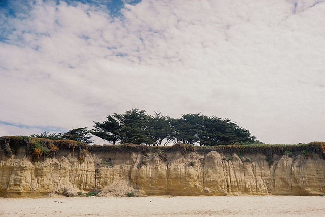 Bluff with cypress