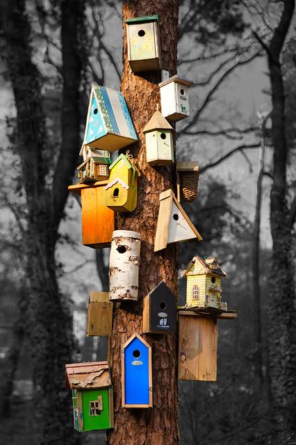 bird residential tower..
