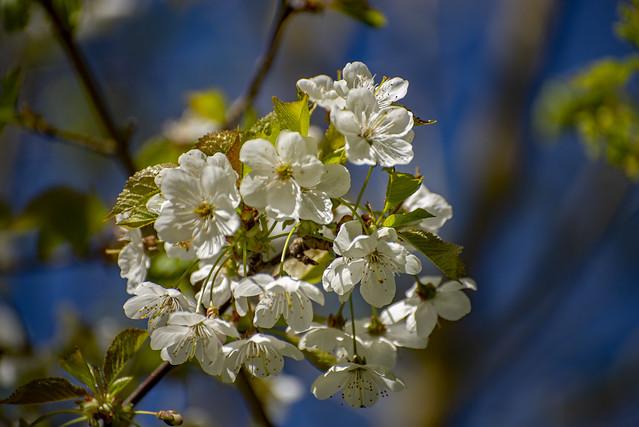 Flowers on Tree.jpg