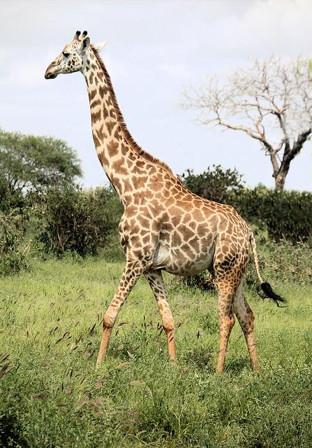 Not the Bronx Zoo ... Kenya