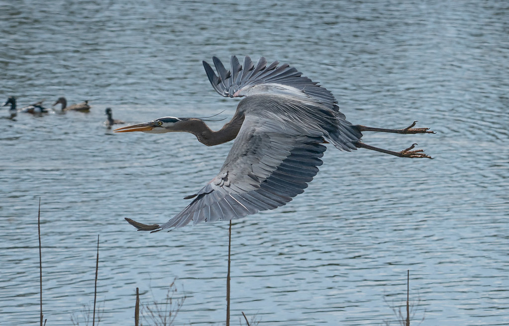 GBH on take off