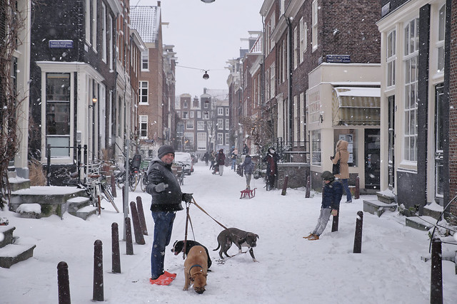 Meeting the neighbor in a snowy Amsterdam