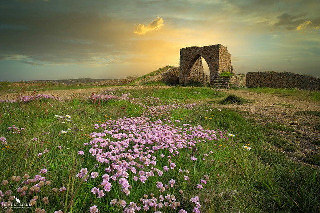 Wild Jersey Flowers At Grosnez Castle