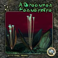 DDDF A'Dracunas Fasuapeipa