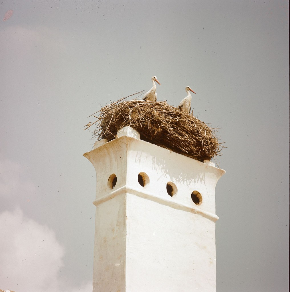 31. Пара аистов находит удобное гнездовье на венгерском дымоходе
