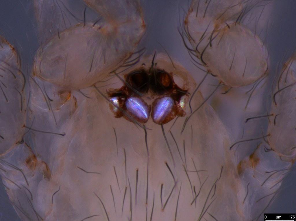 5b - Araneae sp.