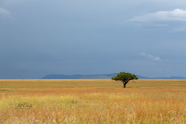 Armchair Traveling - Serengeti Savanna