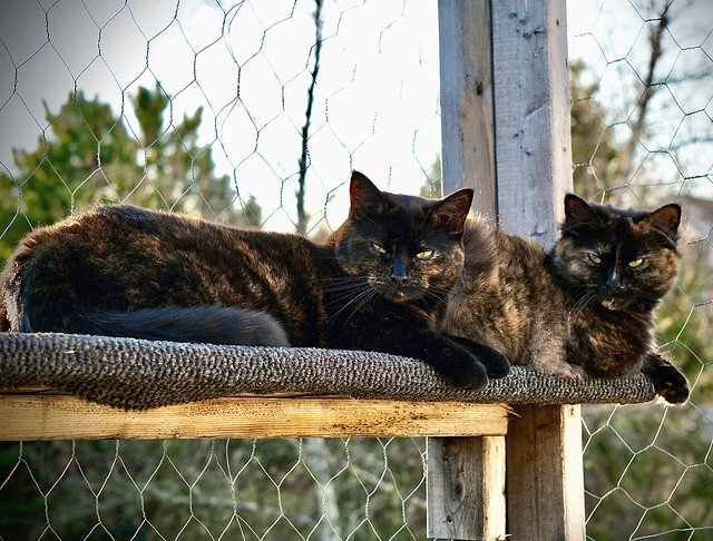 Kitties On Guard