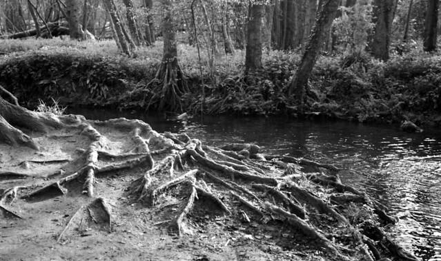 Riverside Roots