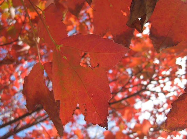 The Reds of Autumn
