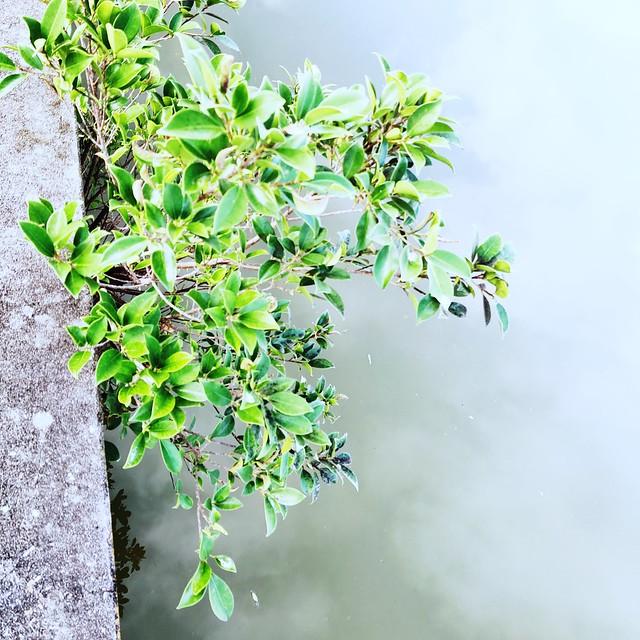 fog branch